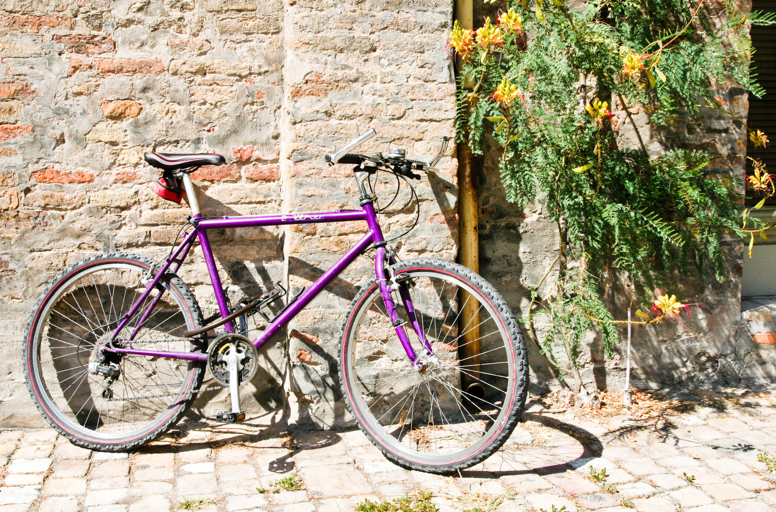 Bicycles in Ravenna, Flickr images reviewed by FlickreviewR 2